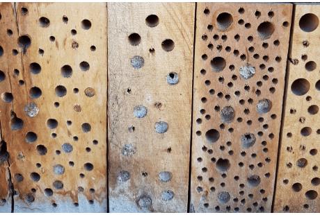 Neuer Lebensraum für Wildbienen
